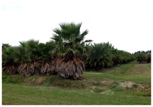 A palm tree nursery.